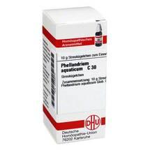 Produktbild Phellandrium Aquaticum C 30