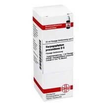 Harpagophytum procumbens D 6 Dilution