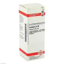 Cantharis D 30 Dilution