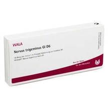 Nervus Trigeminus GL D 6 Ampullen