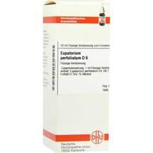 Eupatorium perfoliatum D 6 Dilution