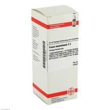 Produktbild Fucus vesiculosus C 2 Dilution