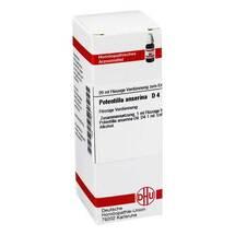 Produktbild Potentilla anserina D 4 Dilution