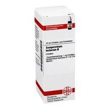 Produktbild Sempervivum tect. Urtinktur Dilution