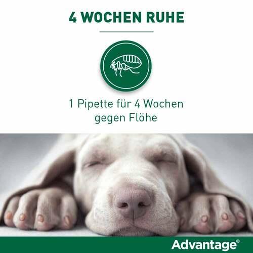 Advantage Hund - 3