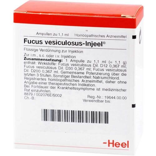 Fucus vesiculosus Injeel Ampullen - 1