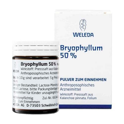 Bryophyllum 50% Pulver zum Einnehmen - 1
