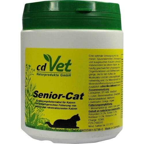 Senior Cat - 1