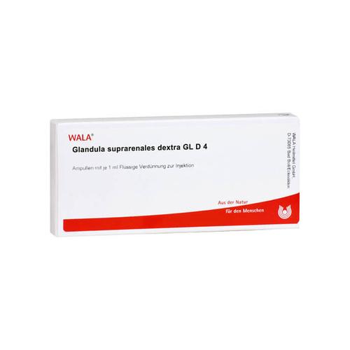 Glandula suprarenalis Dextra GL D 4 Ampullen - 1