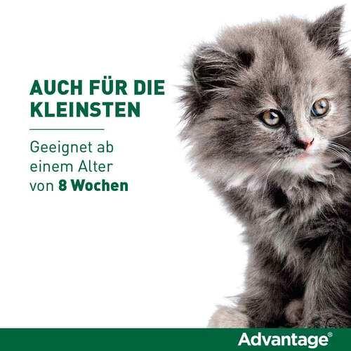 Advantage 40 mg für kleine Katzen und kleine Zierkaninchen - 3