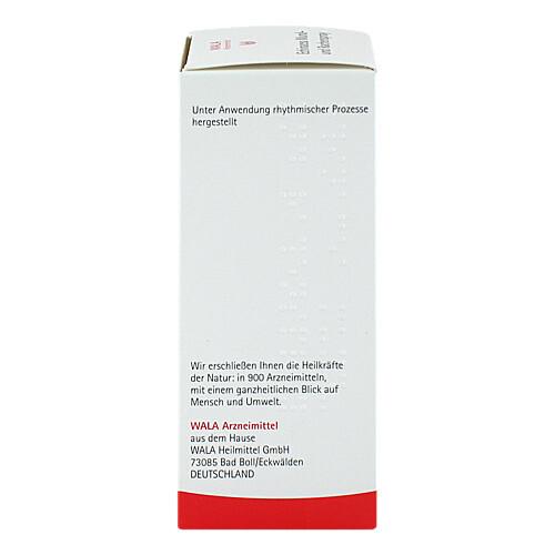 Echinacea Mund- und Rachenspray - 3